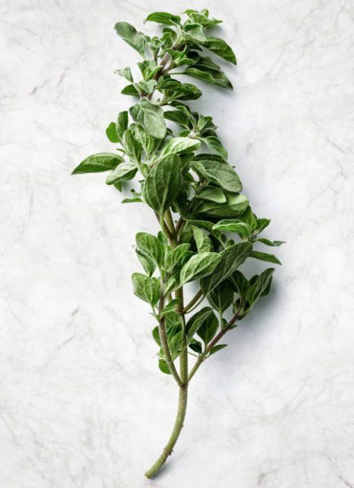 Oregano – condiment, utilizare, plantă | Kotányi
