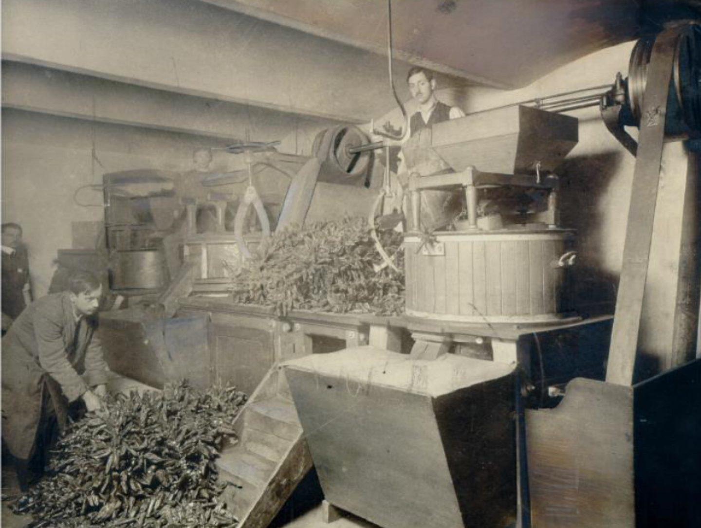 Fotografie alb-negru: O fabrică de boia de ardei dulce Kotányi din 1881